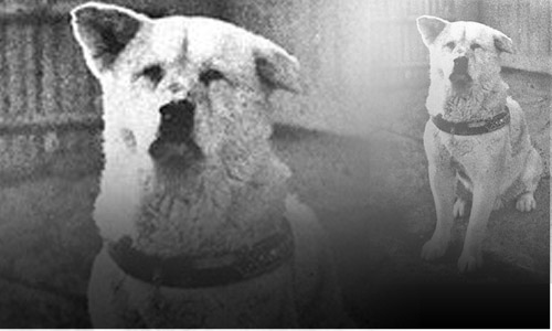 In 1925, a dog named Hachiko waited for 9 years after the death of his master outside the train station every morning until the dog himself passed away